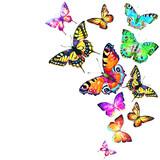 butterfly136