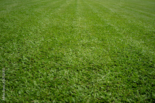 Foto auf AluDibond Grun Backgrounds New Cut Green lawn