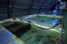 At An Indoor Fishery: Hall Wit...