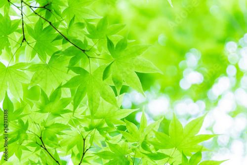 新緑イメージ - 267031388