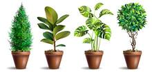 Set Of Potted Houseplants. Garden Potted Plants. Decorative Houseplant. Vector Illustration.