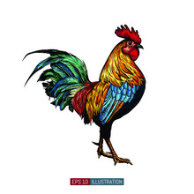 Hand Drawn Rooster Isolated. Engraved Style Vector Illustration. Template For Your Design Works.