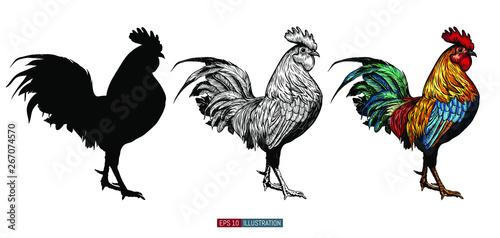 Obraz na plátně Hand drawn roosters set