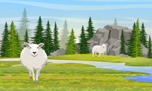 Two White Fluffy Sheep In A Valley With Mountains And A River. Meadow And Spruce Forest. Farm. Realistic Vector Landscape
