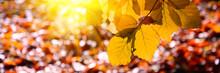 Banner 3:1. Sunlight From Alde...