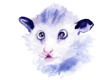 Watercolor Drawing Of An Animal - Small Possum