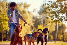 Walking Dogs - Man Dog Walker ...