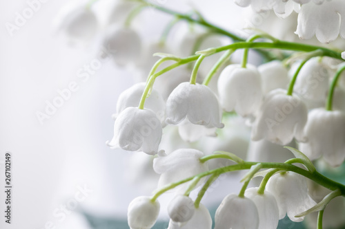Muguet de mai Lily of the valley, Convallaria majalis, white flowers for wedding