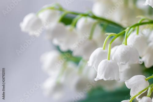 Foto auf Leinwand Maiglöckchen Lily of the valley, Convallaria majalis, white flowers for wedding