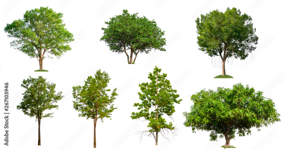Fototapety, obrazy: collection tree on white background