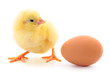 Small chicken and egg isolated.