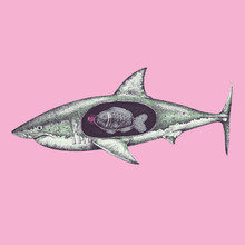 Illustration Of Shark With Pla...