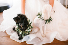 Dogs With Bride