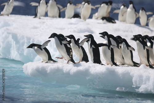 Tuinposter Pinguin Adelie penguins start to jump from an iceberg in Antarctica
