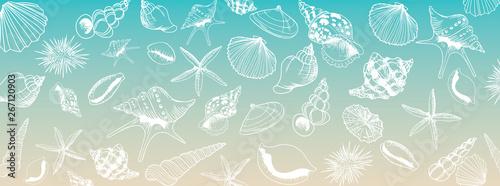 Fototapeta Vector seashell banner obraz