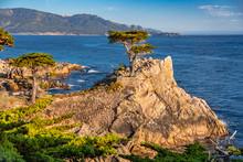 Lone Cypress At The 17-Mile-Drive Road, Pebble Beach, California
