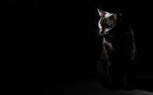 Portrait Of A Black Cat In Stu...