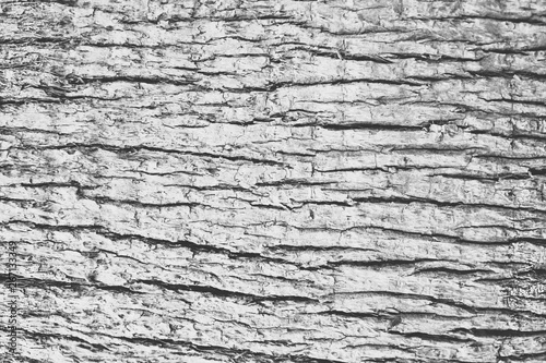 Aluminium Prints Firewood texture Old Dry Cracked Tree Bark Surface Texture. Natural Wood Forest Rough Abstract Background.