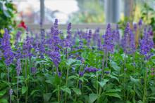 Primavera Y Flores. Temporada De Jardineria.