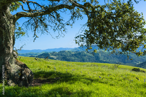Photo An old oak tree frames a beautiful spring/summer landscape of a green grassy mea