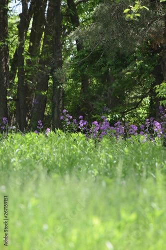 Papiers peints Jardin Meadow