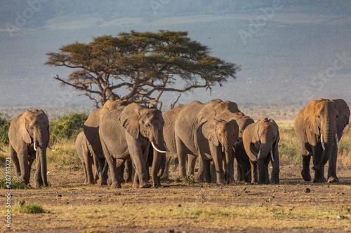Foto op Plexiglas Afrika An Elephant Family in Early Morning, Amboseli National Park, Kenya