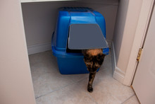 Cat Exiting Litter Box
