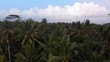 Flyover of jungle tree tops in Bali.
