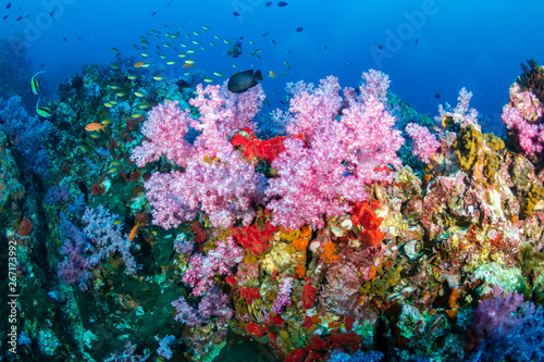 Fototapety, obrazy: A colorful tropical coral reef in the Andaman Sea (Mergui, Myanmar)