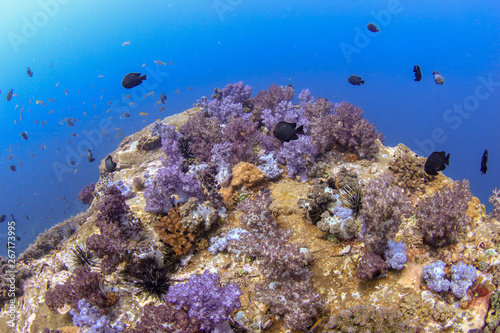 A colorful tropical coral reef in the Andaman Sea (Mergui, Myanmar)