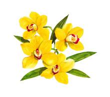 Cymbidium Orchid Golden Seamless Watercolor On White