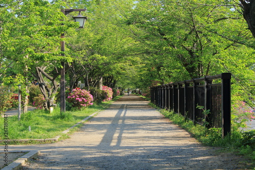 Canvas Prints Bridge 京都、長岡天満宮の境内の新緑と遊歩道