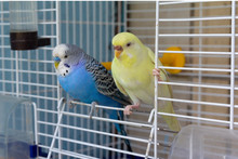 Two Parrot Sits At The Exit Of...