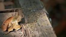 Closeup Shot Of Ants Walking P...