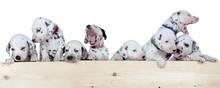 Süße Hundewelpen Auf Einem Holzbalken