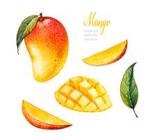 Mango. Botanical Watercolor Ha...