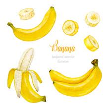 Banana. Banana Slice. Bunch Of Bananas. Watercolor Botanical Illustration. Watercolor Fruit