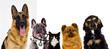 Leinwandbild Motiv set of pets watch