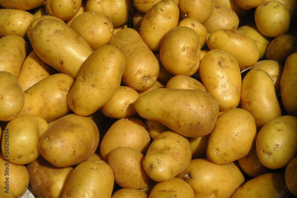 Fototapety, obrazy: Pommes de terre nouvelles