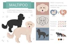 Designer Dogs, Crossbreed, Hyb...