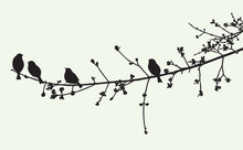 The Birds On A Tree Branch In The Spring Time