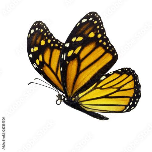 Photo  Beautiful monarch butterfly
