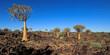 Leinwandbild Motiv Panoramic landscape of quiver trees (Aloe dichotoma) and granite rocks, Namibia.