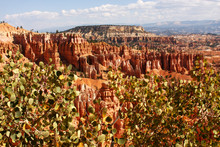 Summer View Of Bryce Canyon