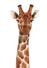 Watercolor Giraffe Portrait