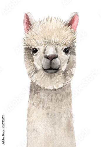 Watercolor lama portrait