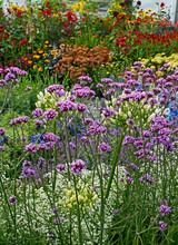 Colourful Garden Border With V...