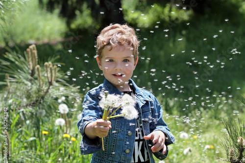 Fotografia  Little boy scatters dandelion seeds
