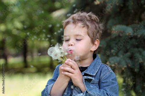 Tela  Little boy scatters dandelion seeds