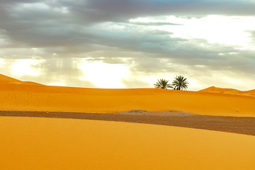 Sand dunes and palm in the Sahara Desert